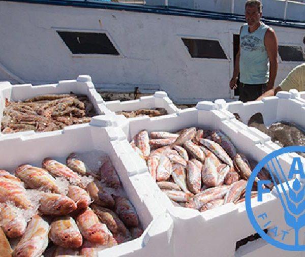 LA FAO analizará el impacto del Covid-19 en el comercio mundial de pesca