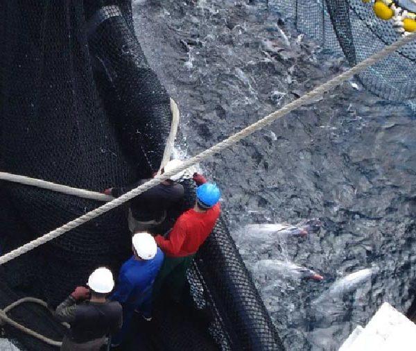 El estándar Atún de Pesca Responsable, referencia internacional
