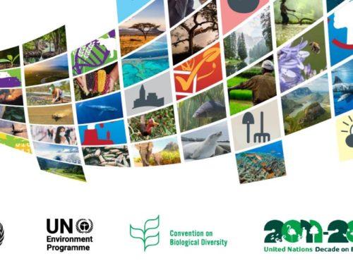 La ONU afirma que la pesca sostenible ayuda a mantener la biodiversidad